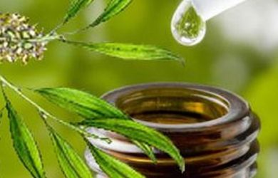 Do You Know About The Various Beneficial Properties Of Tea Tree Oil